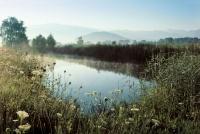 Schutzgebiet Spitzmäder bei Altstätten SG (Quelle: Herbert Maeder)